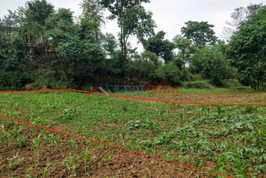 1 Ropani Land Sale at Badikhel, Godawari, Lalitpur