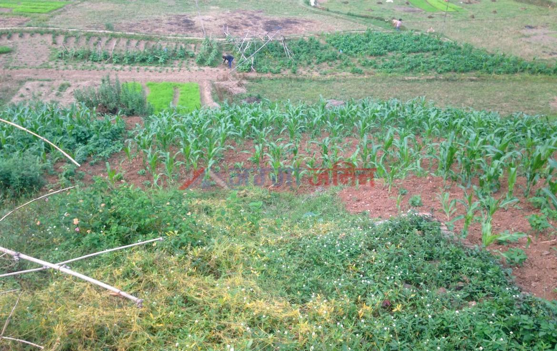 13 Ropani Land Sale at Badikhel, Godawari