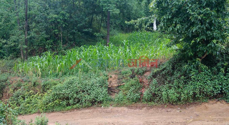 4.1 Anna Land Sale at Badikhel, Godawari, Lalitpur