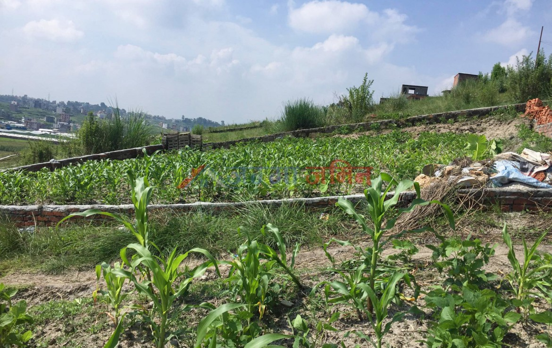 4.1 Anna Land Sale at Phutung, Tarkeshwor, Kathmandu