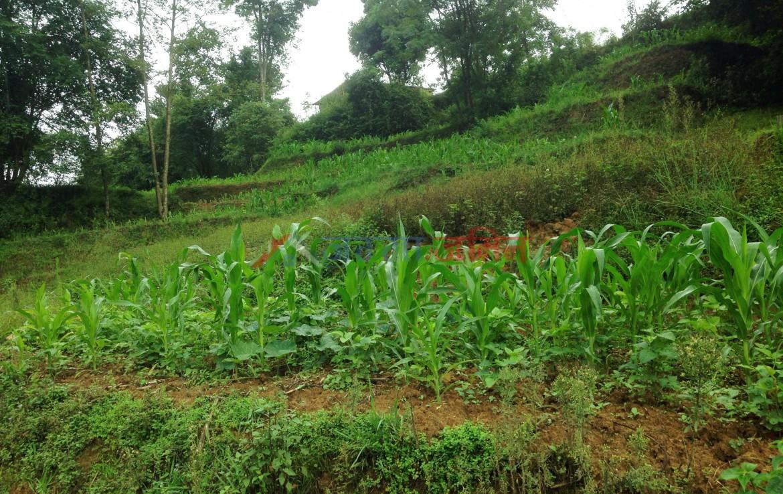13 anna land sale at badikhel, godawari, lalipur