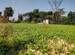 24 aana land sale in badikhel godawari-4