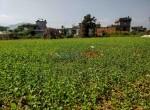 24 aana land sale in badikhel godawari-6