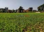 24 aana land sale in badikhel godawari-8