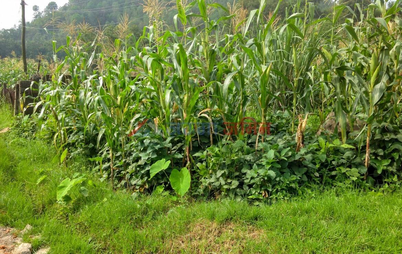 7 anna land at Godawari, Lalitpur