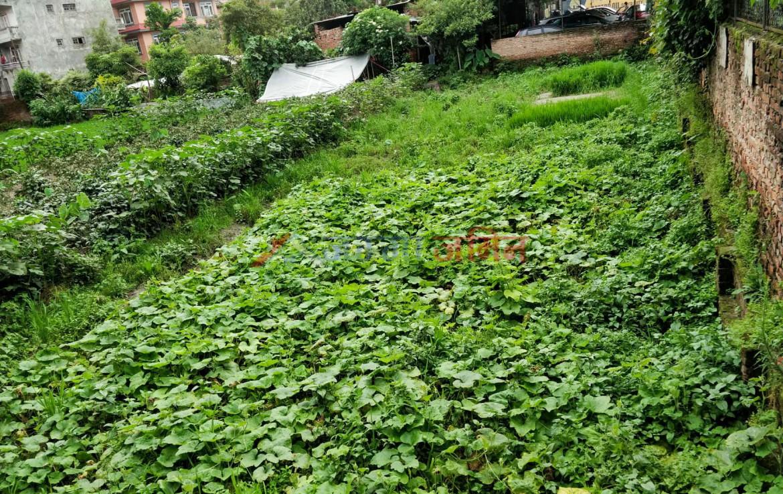 buy 9 anna land at Ranibari, Samakushi, Kathmandu