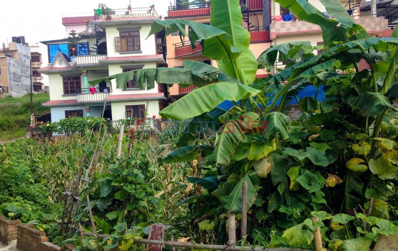 4 anna hattiban, Lalitpur