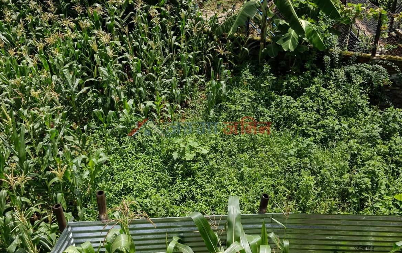 buy 8 anna land at Taukhel, Kitini, Godawari