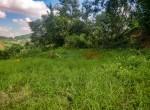 9 ann land near 10 anna 2