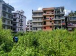 75 aana land sale in samakushi (6 of 7)