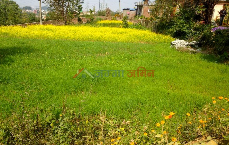 14 aana land sale in godawari