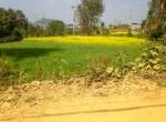 14 aana land sale in godawari-2
