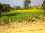 14 aana land sale in godawari-3