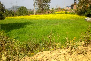 land sale in lalitpur