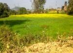 14 aana land sale in godawari-6