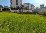 5 aana land sale in thapa gaun-2