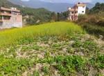 5 aana land sale in thapa gaun-3
