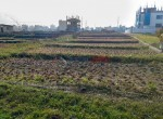 plotting land for sale in lubhu-4