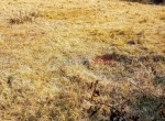 ropani land for sale in budhanilkantha (4 of 9)
