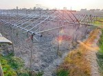 24 aana land for sale in sangla-4