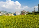 5 aana land for sale in syuchatar-10