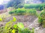 land for sale in sangla tarkeshwar (1 of 4)
