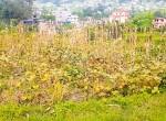 land for sale in sangla tarkeshwar (3 of 8)