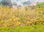 land for sale in sangla tarkeshwar (4 of 8)