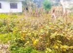 land for sale in sangla tarkeshwar (7 of 8)