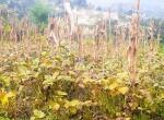 land for sale in sangla tarkeshwar (8 of 8)