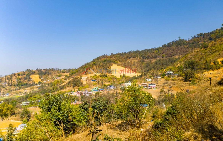 buy land in godawari